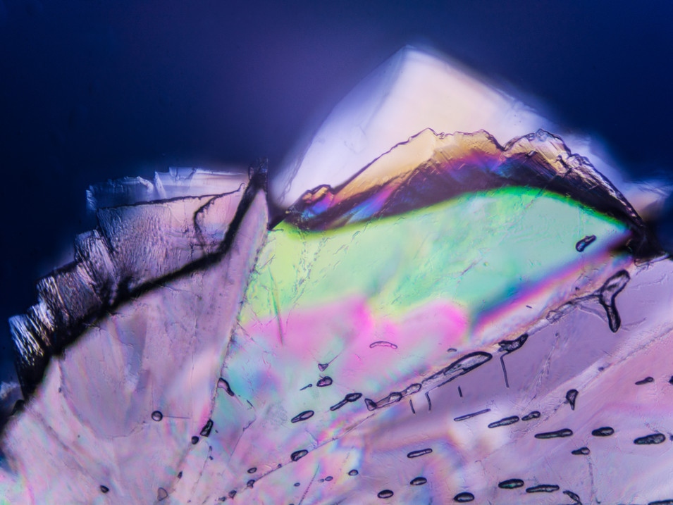 PROJECT: PHOTOMICROGRAPHY