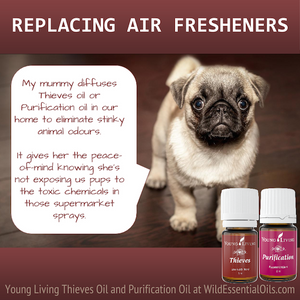 Replacing air fresheners for dogs