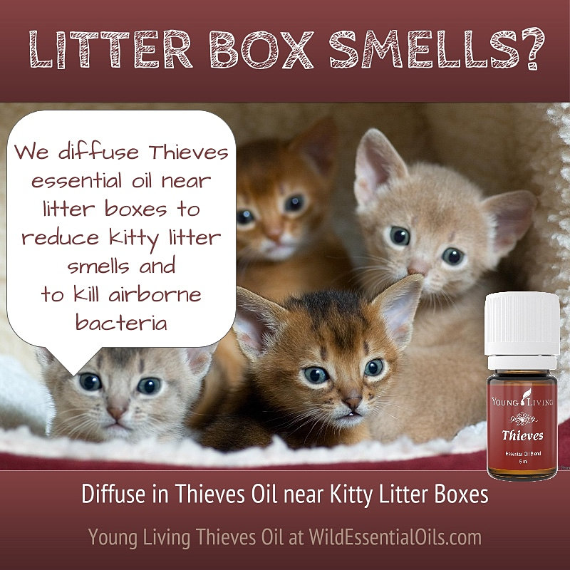 young living essential oils australia thieves oil for kitty litter smells. Black Bedroom Furniture Sets. Home Design Ideas