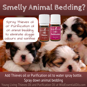 Thieves oil for animal bedding smells