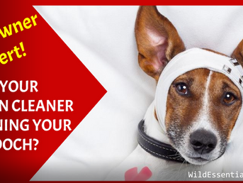 Dog Owner Alert - Is Your Kitchen Cleaner Poisoning your Pooch?