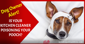 Health Hazards of cleaning products for dogs