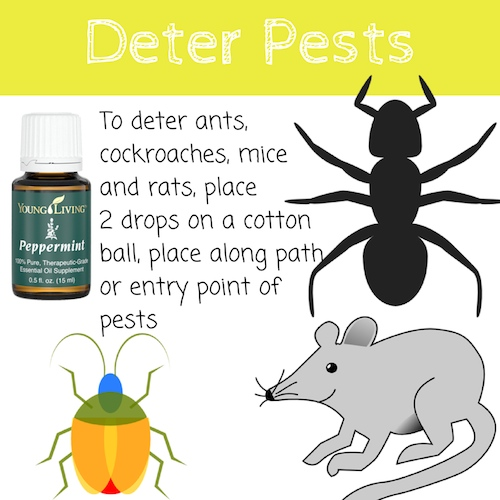 Peppermint essential oil Deter Pests