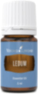 Young Living ledum cleanse therapeutic food grade essential oil