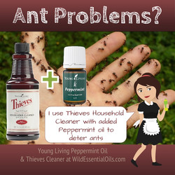 Peppermint Thieves Cleaner for Ants