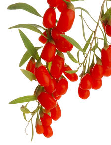 NingXia Red Wolfberry