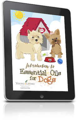 Introduction to Essential Oils for Dogs