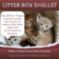 Thieves oil for kitty litter