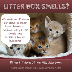 Thieves oil for litter boxes