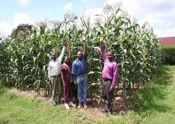 farming-gods-way-maize-kenya.jpg