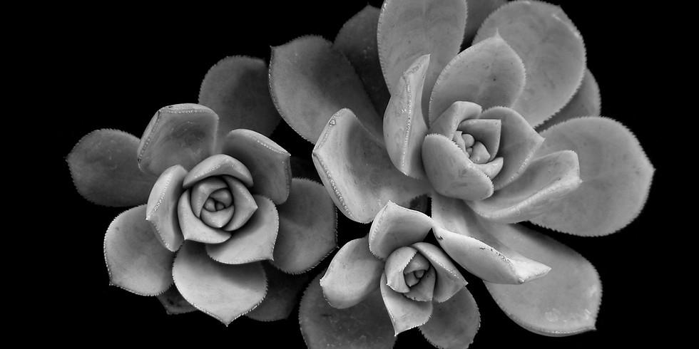 Succulent 101 Gardening Workshop