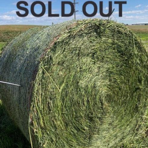Lot S1 HM : Italian Ryegrass, low lignin Alfalfa and Haymaker Oats