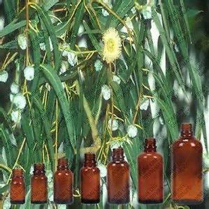 Eucalyptus citriodora - 10ml