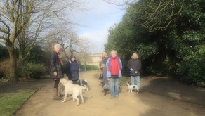 Power of the Pooch - Community dog walks with Pets and Pals!