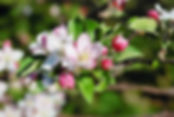 dsc_0443_edited.jpg