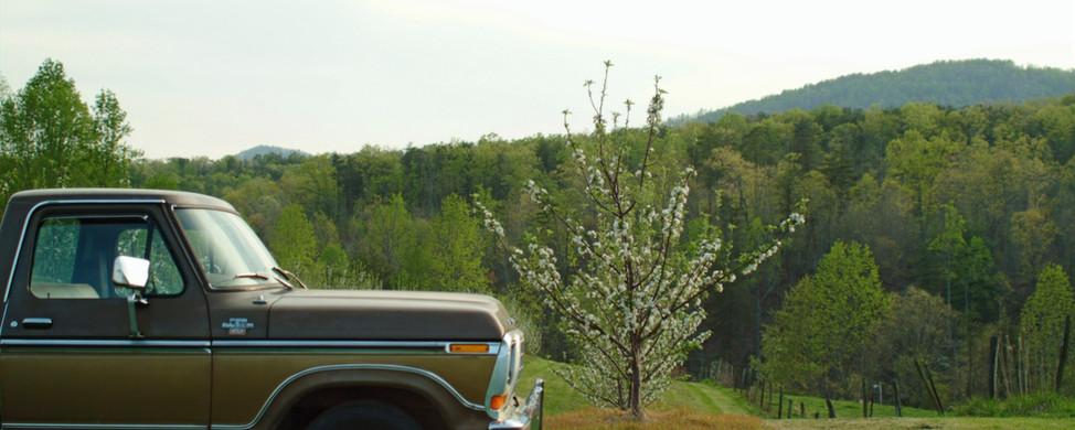springblossoms%20085_edited.jpg