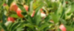 applesontreegala_edited_edited.jpg