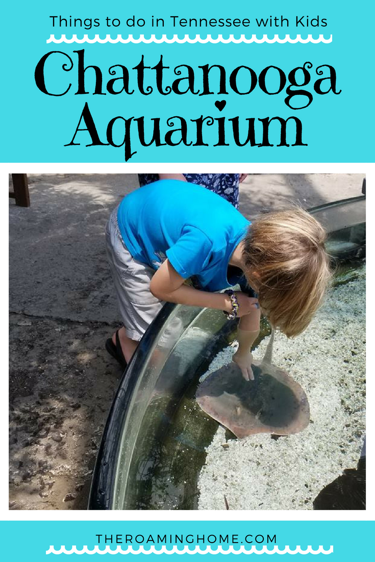 Fun things to do in TN with Kids- Chattanooga aquarium