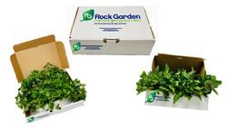 box mint & cilantro
