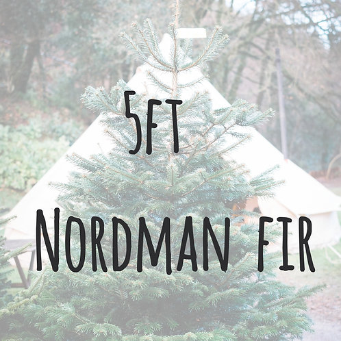 5 ft Nordmann fir