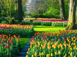 what flowers should I plant in the fall? Tulips