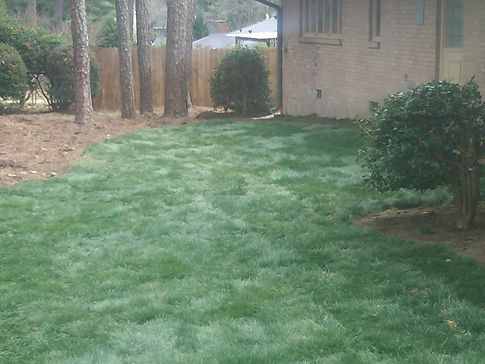 Fescue sod installed in Conyers, Ga