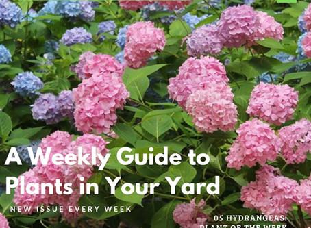 New WEEKLY Landscape Magazine!