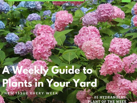 New WEEKLY Landscape Magazine!