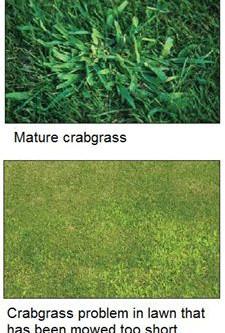 Fescue Crabgrass Preventers- Word Of Caution
