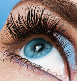 Lash and Brow Client Gallery