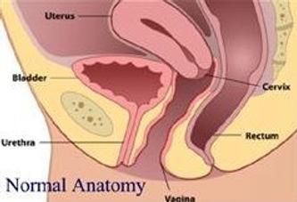 prolapse-Normal anatomy.jpg