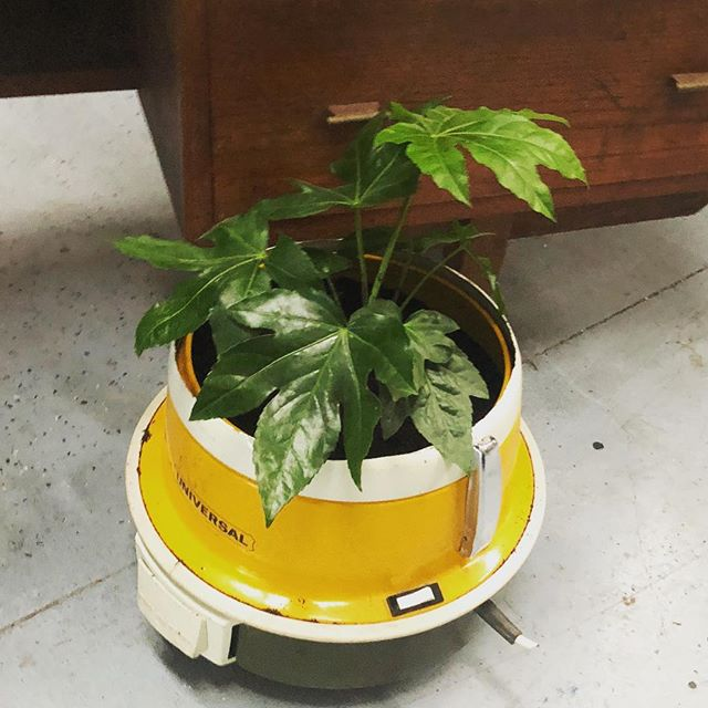 Upcycled Planter