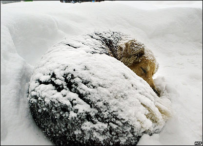 Join our fight to save Dogs and Cats left outside to freeze in 2019