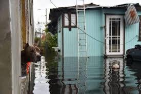 Saving Animals From Hurricane Isaias