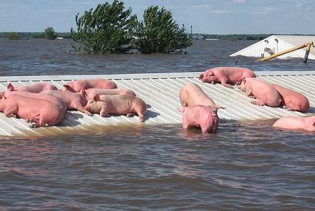 Flooding is devastating for Animals in Nebraska & Iowa.
