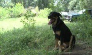 Midwest Rottweiler Rescue (Nebraska)