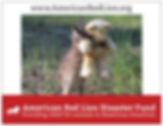 preview 3 wildlife - Copy.jpg