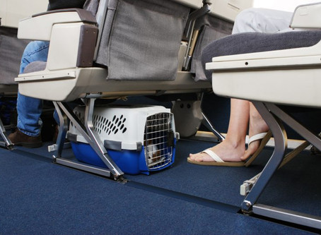Traveling with your pet amid COVID-19 restrictions
