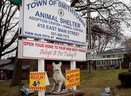 Smithtown Animal Shelter (New York)
