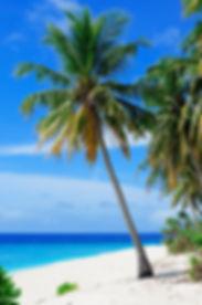 beach-coconut-trees-coconuts-240526.jpg