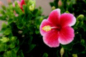 hawaii-644088_640.jpg