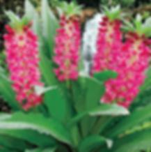 Aloha Lilly  (2).png