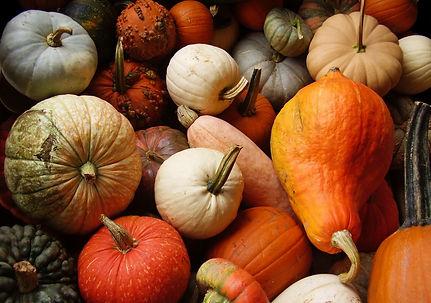 Pumpkins 2.jpeg