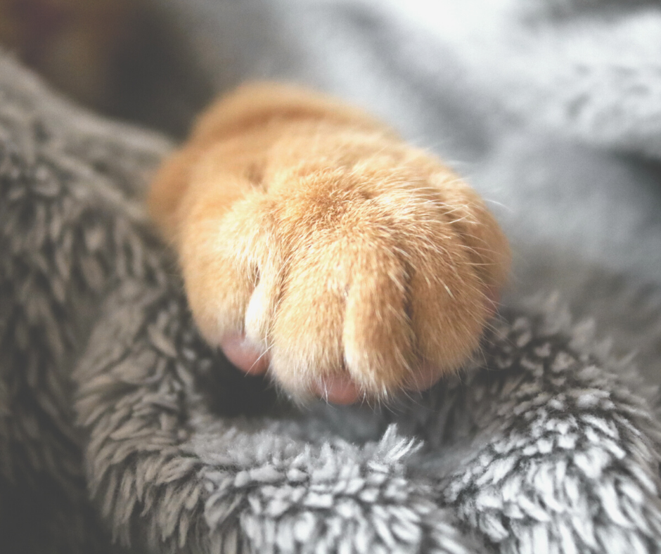 cat paw gentle touch