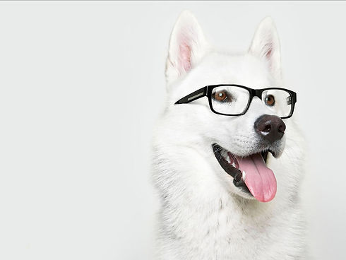 Animals___Dogs_Dog_in_glasses_084984_2.j