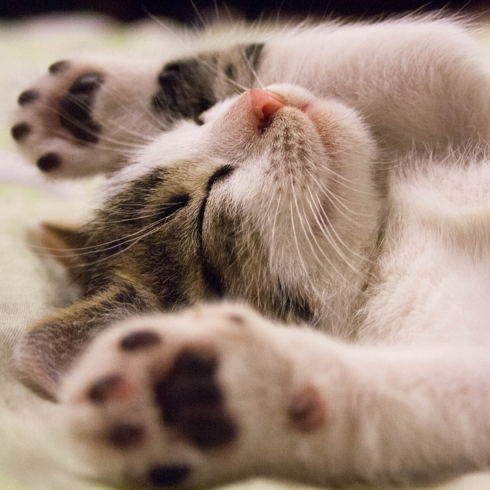 kitten paws and toe beans