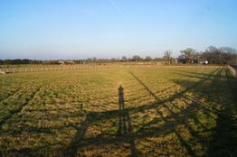 Pinto Fields Livery Yard Windsor & Maidenhead, Berkshire   Fields