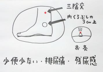 【血管と心機能には丹参】/鍼灸ゆーせん/大阪府八尾市