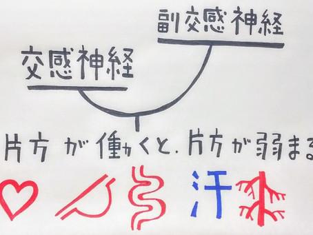 【自律神経について】/鍼灸院/鍼灸ゆーせん/大阪府八尾市上尾町