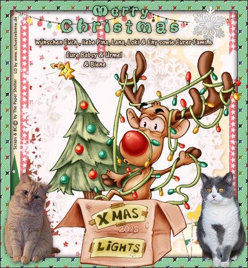 weihn-18-geschenk-Freunde-Schugercats.jp